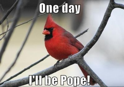 One-Day-I-Will-Be-Pope-Red-Bird-Funny-Thoughts.jpg