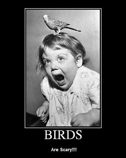 scary-birds.jpg